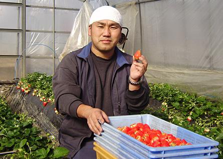 矢沢農園のいちご